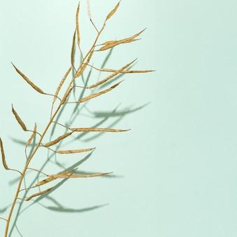 Herbe sèche de couleur dorée sur fond clair. concept de nature minimale.