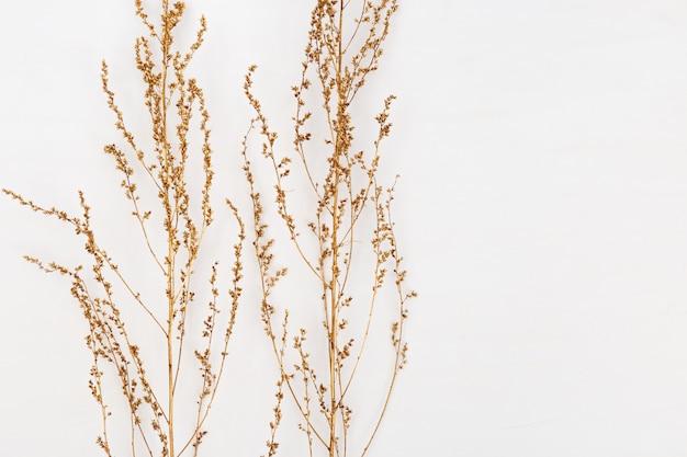 Herbe sèche dorée sur blanc