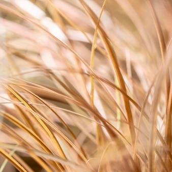 L'herbe sèche floue laisse à l'extérieur