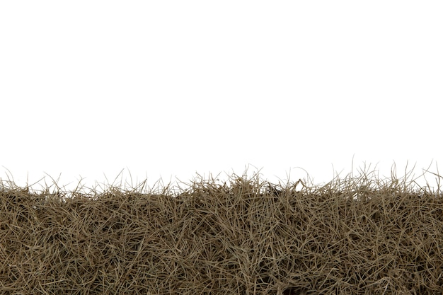 Herbe sèche isolé sur fond blanc avec une tracé de détourage.