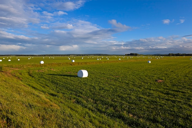 Herbe tassée - l'herbe emballée en balles pour nourrir les animaux en hiver