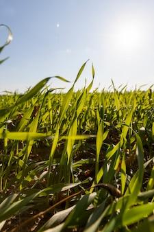 Herbe Sur Le Terrain Photo Premium