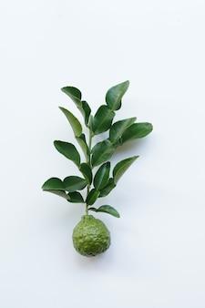 Herbe thaïlandaise bergamote verte fraîche pour soins spa et capillaire