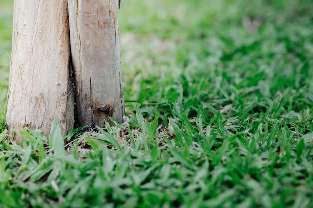 L'herbe vers le bambou mis en place
