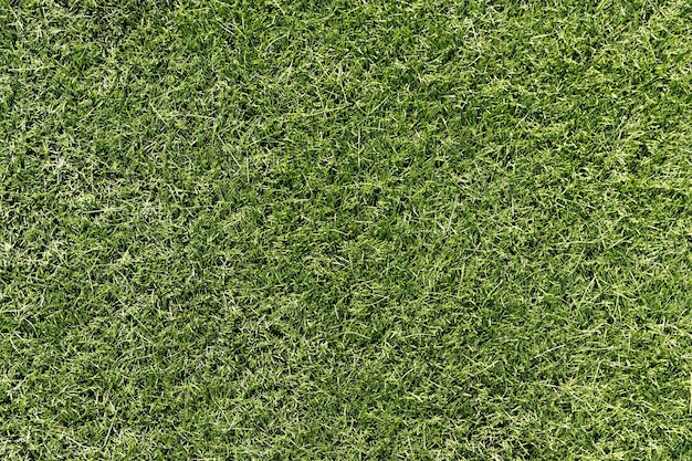 Herbe vert clair. arrière-plan pour la conception. photo de haute qualité