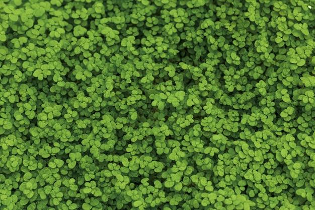 Herbe verte au sol