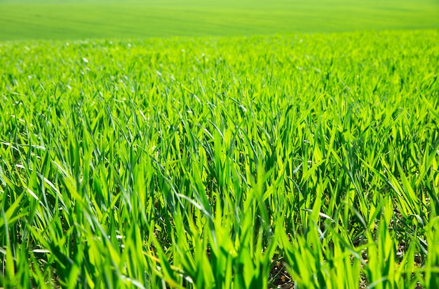Herbe verte aux beaux jours