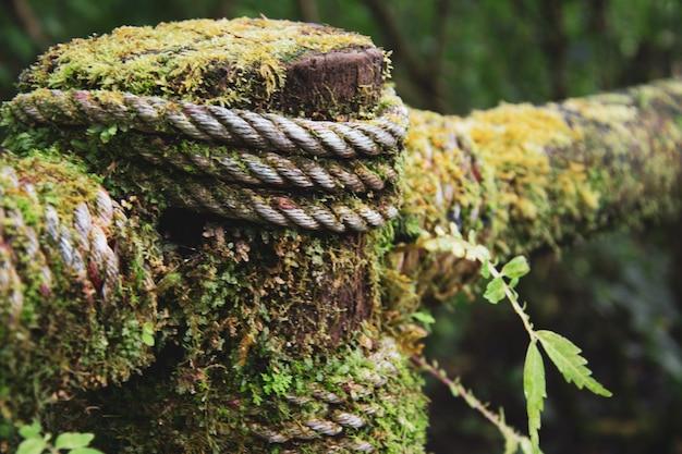 Herbe verte de bornéo, corde mouillée et fougère