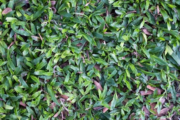 L'herbe verte brillante sur la cour de pelouse