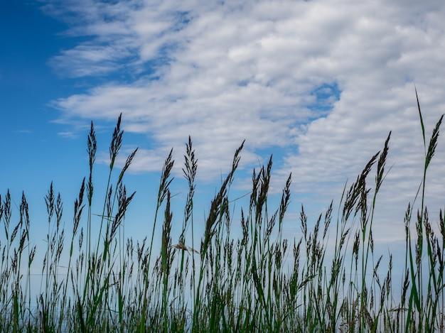Herbe verte ciel bleu / fond libre de la nature.