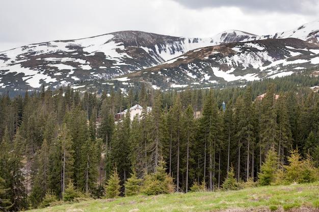 Herbe verte avec ciel bleu et montagne enneigée