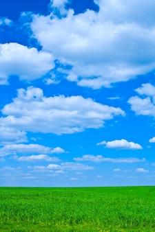 Herbe verte et ciel bleu