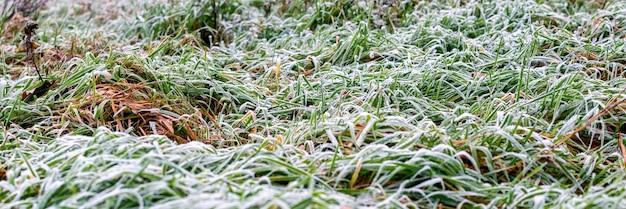 Herbe verte couverte de givre au début de l'hiver, fond d'hiver, panorama