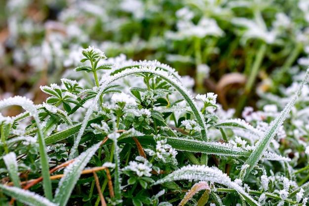 Herbe verte couverte de givre, les premières gelées