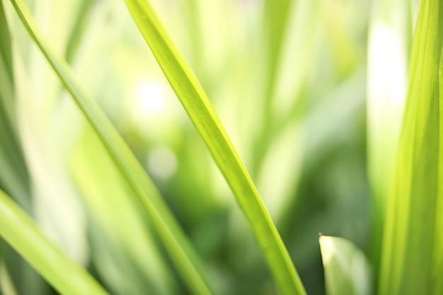 Herbe verte dans les champs.