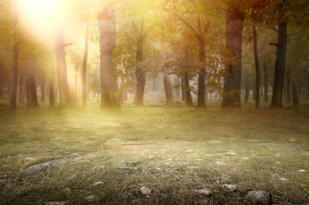 Herbe verte dans la forêt avec la lumière du soleil