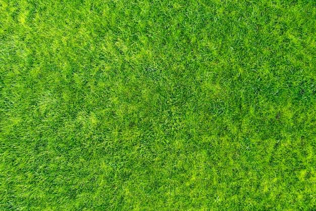 Herbe verte dans le jardin. magnifique fond d'été.