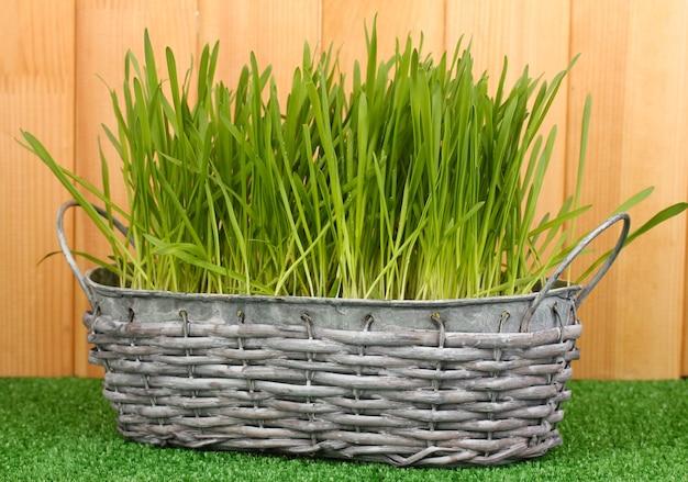 L'herbe verte dans le panier près de la clôture