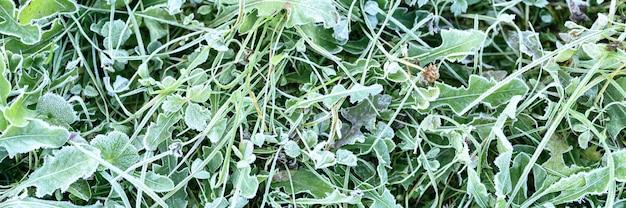 Herbe verte avec du givre du matin dans le jardin, herbe gelée avec du givre sur le pré au lever du soleil. motif texturé de fond naturel. vue de dessus. bannière