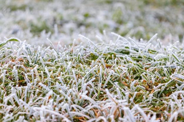 Herbe verte épaisse couverte de givre, fond d'automne et d'hiver