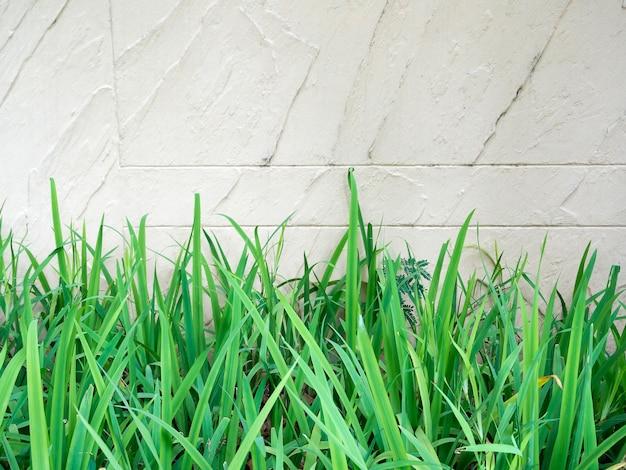 Herbe verte sur fond de mur de briques blanches