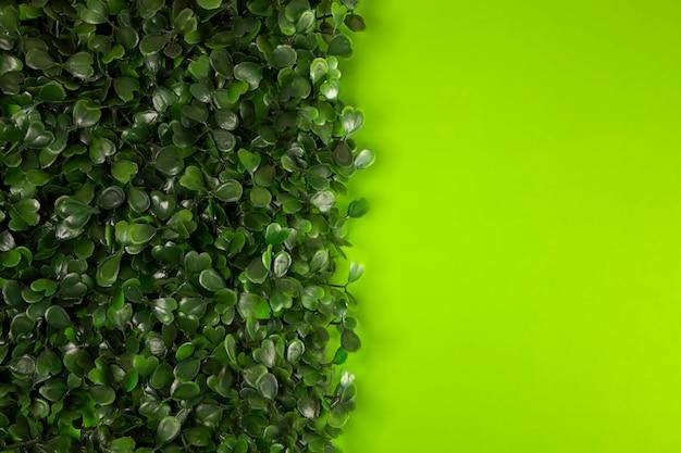 Herbe verte sur fond vert. starweed -winterweed, mouron des oiseaux, satinflower, stellaria media-plantes. bonnes feuilles vertes. fond vert. texture. herbe.