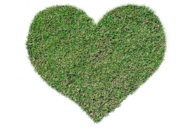 Herbe verte en forme de coeur poussant sur isolé sur blanc.