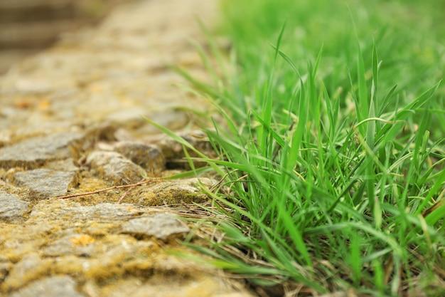 Herbe verte fraîche à l'extérieur