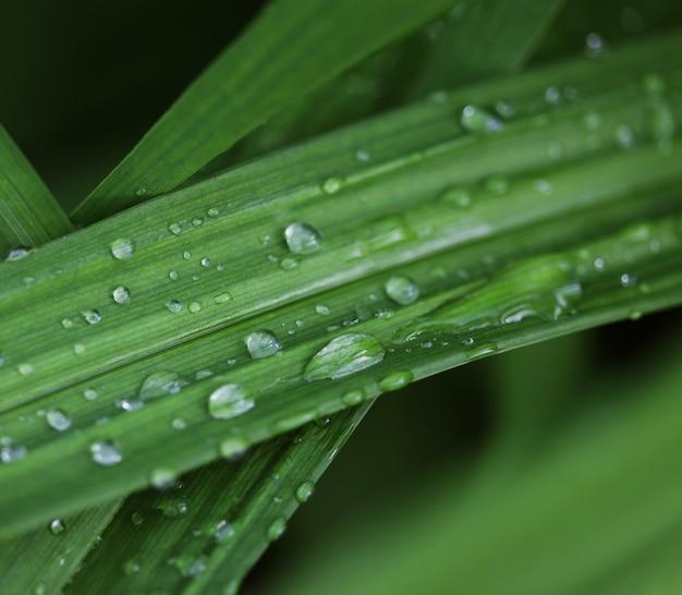Herbe verte avec des gouttelettes d'eau au soleil