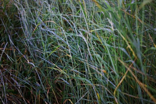 Herbe verte luxuriante parsemée de gouttes de pluie