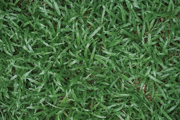 L'herbe verte naturelle peut être utilisée comme arrière-plan