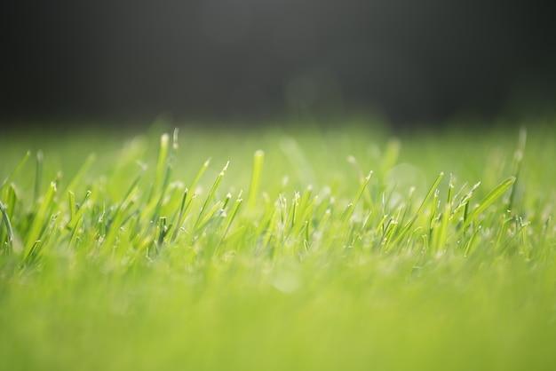 L'herbe verte. pelouse.