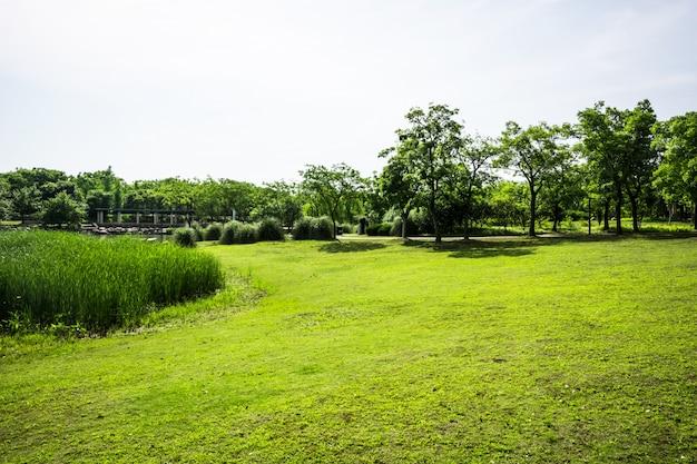 Herbe verte sur un terrain de golf