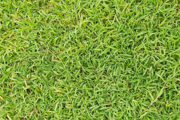 L'herbe verte. texture de fond naturelle
