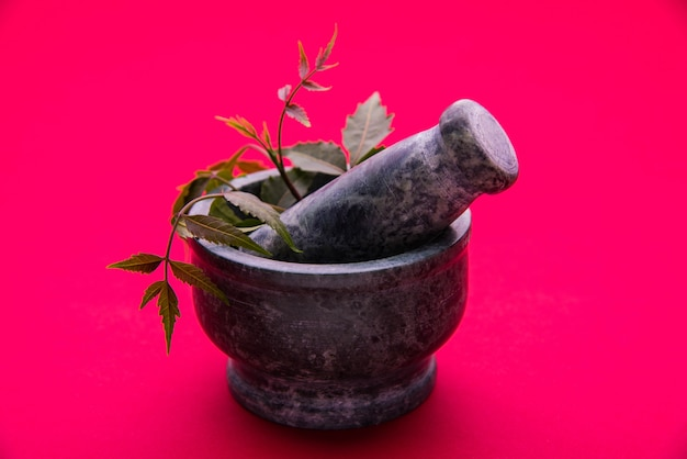 Herbes antibactériennes ayurvédiques neem ou lilas ou azadirachta indica avec de l'huile en bouteille avec du mortier, isolées sur fond uni, mise au point sélective