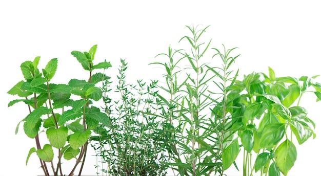 Herbes de cuisine vertes fraîches isolated on white