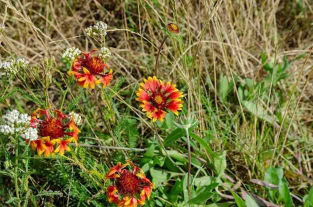 Herbes et fleurs sauvages d'été