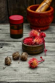 Herbes médecine alternative