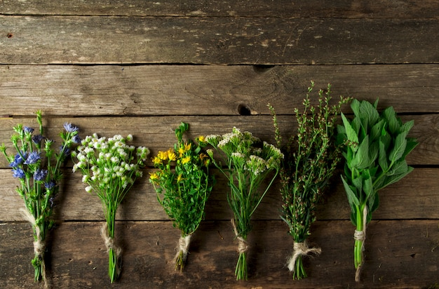 Herbes médicinales fraîches.