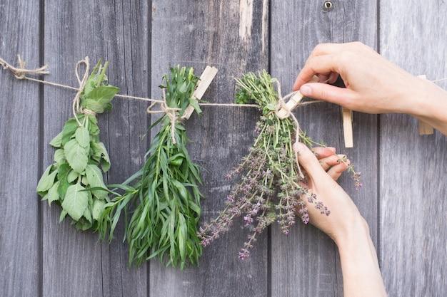 Les herbes pendent et sèchent. mains avec épingle