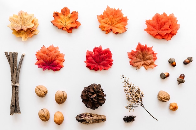 Herbier d'automne de détails d'arbres colorés