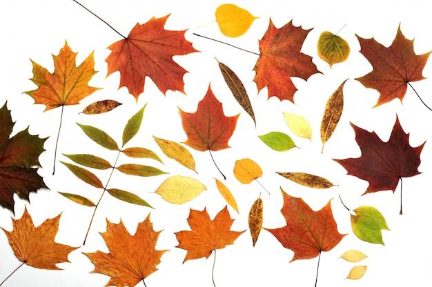 Herbier de feuilles d'automne