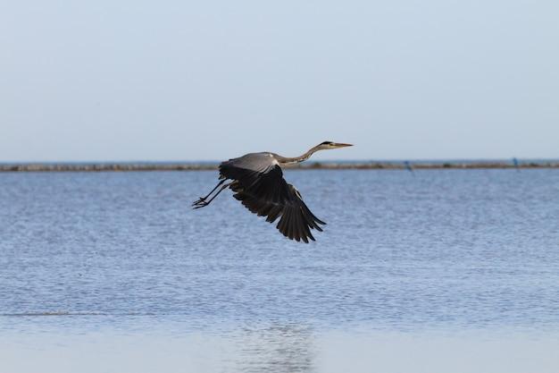 Héron cendré à l'intérieur de la lagune de la rivière po panorama de la nature minimale