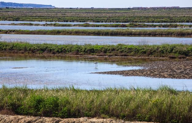 Héron dans les bassins d'évaporation du sel à secovlje