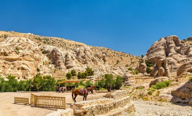 Les heures bédouines se reposent dans l'ancienne ville de petra, jordanie