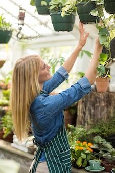 Heureuse femme suspendue des plantes en pot