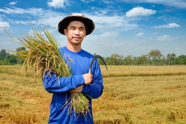 Heureux agriculteur récolte du paddy dans un champ de riz en thaïlande