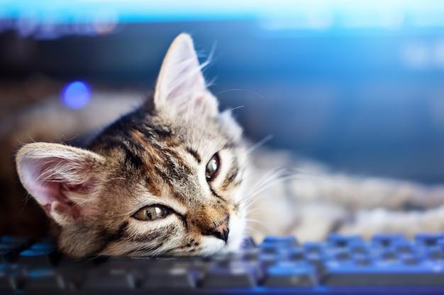 Heureux chaton mignon couché sur le clavier