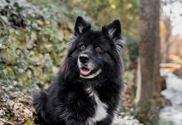 Heureux gros chien dans la nature