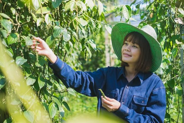 Heureux jeune paysanne asiatique récolte piper nigrum poivre dans une ferme